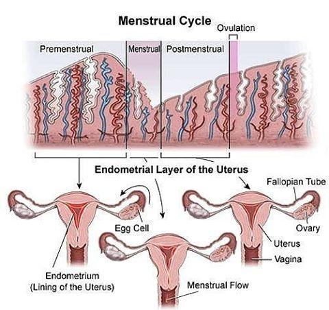Endometriosis endometriosis adalah istilah untuk menyebutkan endometriosis endometriosis adalah istilah untuk menyebutkan kelainan jaringan endometrium rahim ccuart Gallery