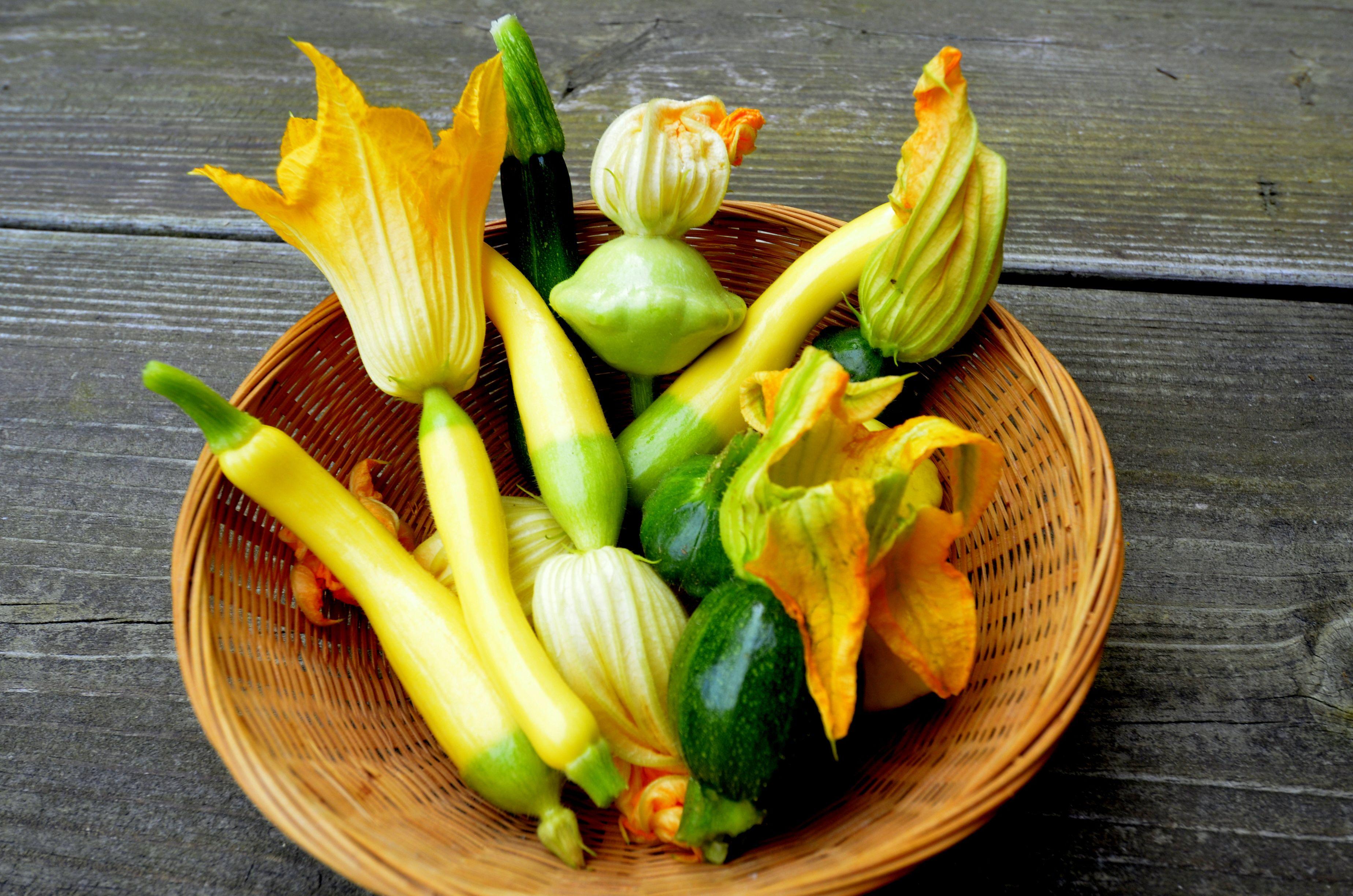 zephyr squash grow cook eat culinary gardens at beechwood inn