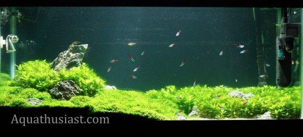 Nualgi Aquarium Is Designed To KILL ALGAE In Your Freshwater And Saltwater  Tanks! Http: