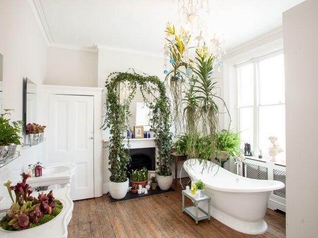 Houseplants that thrive in your bathroom Bedroom plants