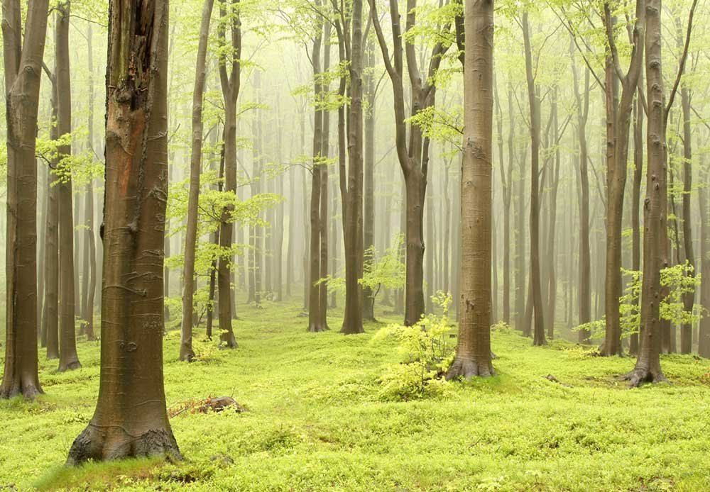 Green Misty Forest Mural Wall Mural, Removable Sticker