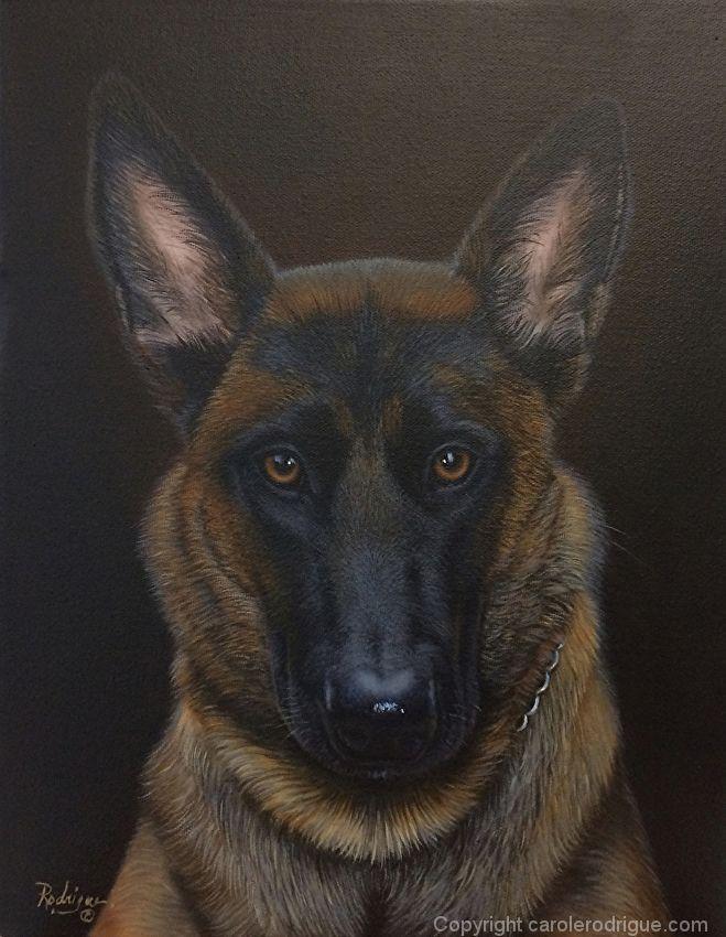 Luna Belgian Malinois Portrait By Carole Rodrigue Oil 14 X 11 Dog Paintings Dog Art Animal Paintings