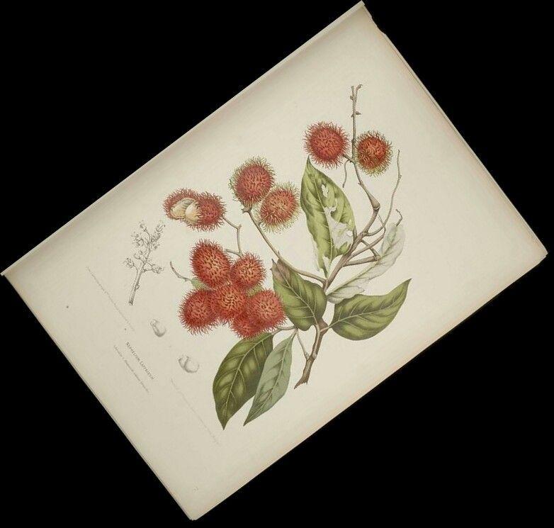 Rambutan, Berthe Hoola Van Newton, BHL via Flickr. Like a peeled green grape in a long-haired strawberry wrapper.