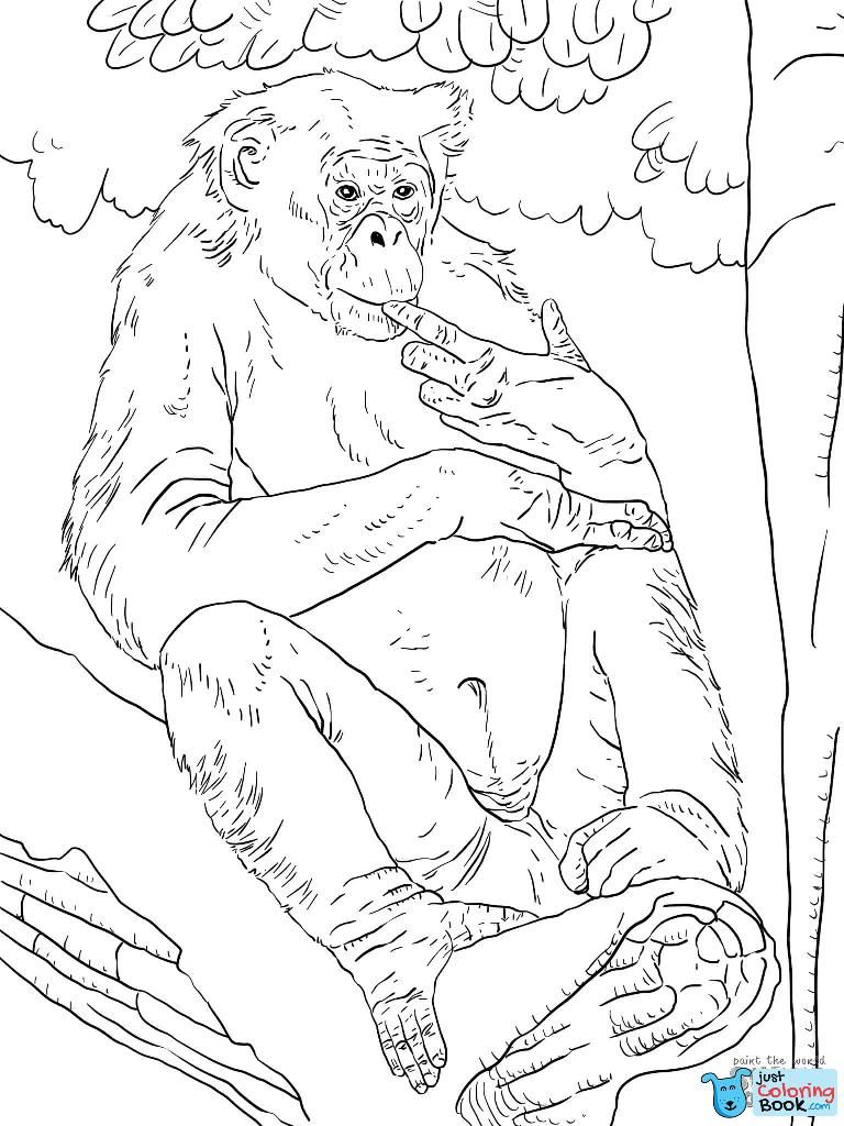 Bonobo Coloring Page Bilder