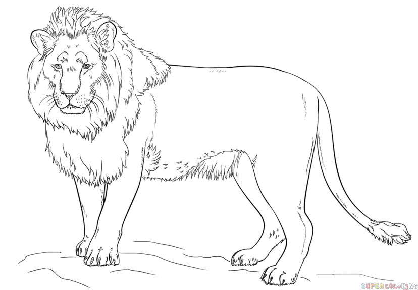 How to draw a lion step by step. Drawing tutorials for kids and ...