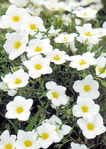 Garden Bush: Best White Flowers For Your Garden