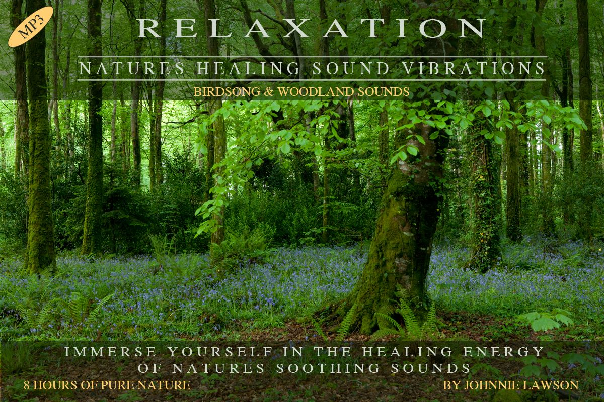 No 11 - 1hr  or 8hr  mp3:- Birdsong & Woodland Sounds