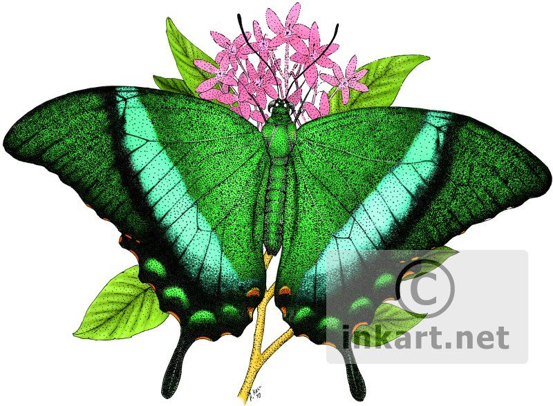 emerald swallowtail butterfly tattoo idea to represent Damien