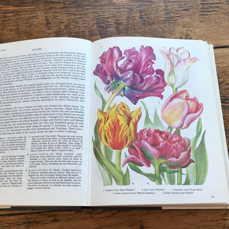 Illustrated Book Of Garden Flowers Vintage Book Of Botanical Etsy Botanical Illustration Vintage Book Floral Illustrations