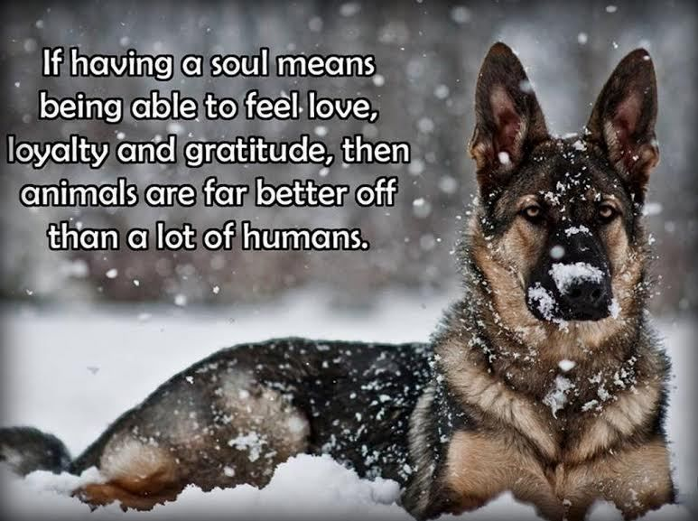 German Shepherd Refrigerator Magnet 2 1 2x 3 1 2 German Shepherd Funny Dog Quotes Love German Shepherd Puppy Funny