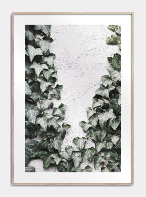 Growing Ivy Plakat Pynt Dit Hjem Med Vores Fotokunst Plakater I 2020 Fotokunst Plakater Botaniske Plakater