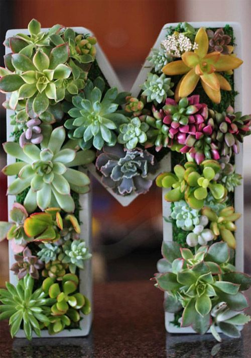 Succulent Monogrammed Planter Box Jardins Succulentes Verticaux