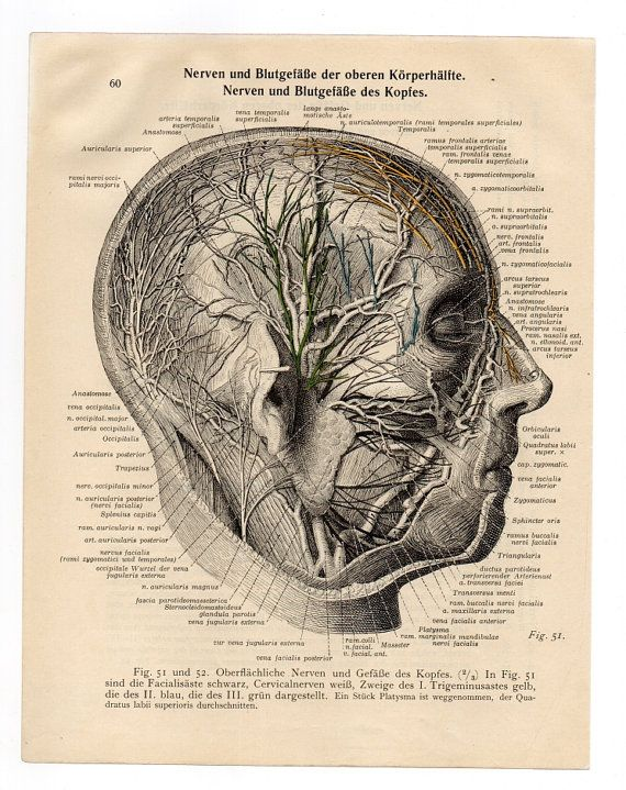Vintage posters prints upcycle recycle medical print anatomical vintage posters prints upcycle recycle medical print anatomical skull head anatomy diagram human skull book page anatomic art ccuart Image collections