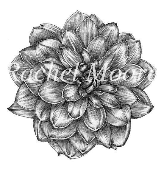 Dahlia Flower Drawing Flower Drawing Dahlia Tattoo Dahlia Flower