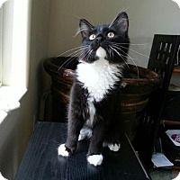 Find A Pet To Adopt Petsmart Charities Pets Homeless Pets Help Homeless Pets