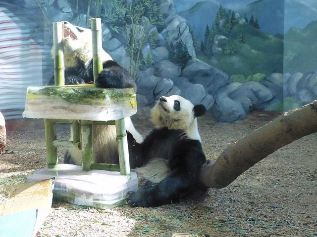 Oh Mom Lun Lun Goes For The Bamboo Candles Bamboo Candle Panda Bear Panda