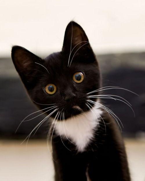Cats Katzen Katzen, Schwarze katze, Tiere