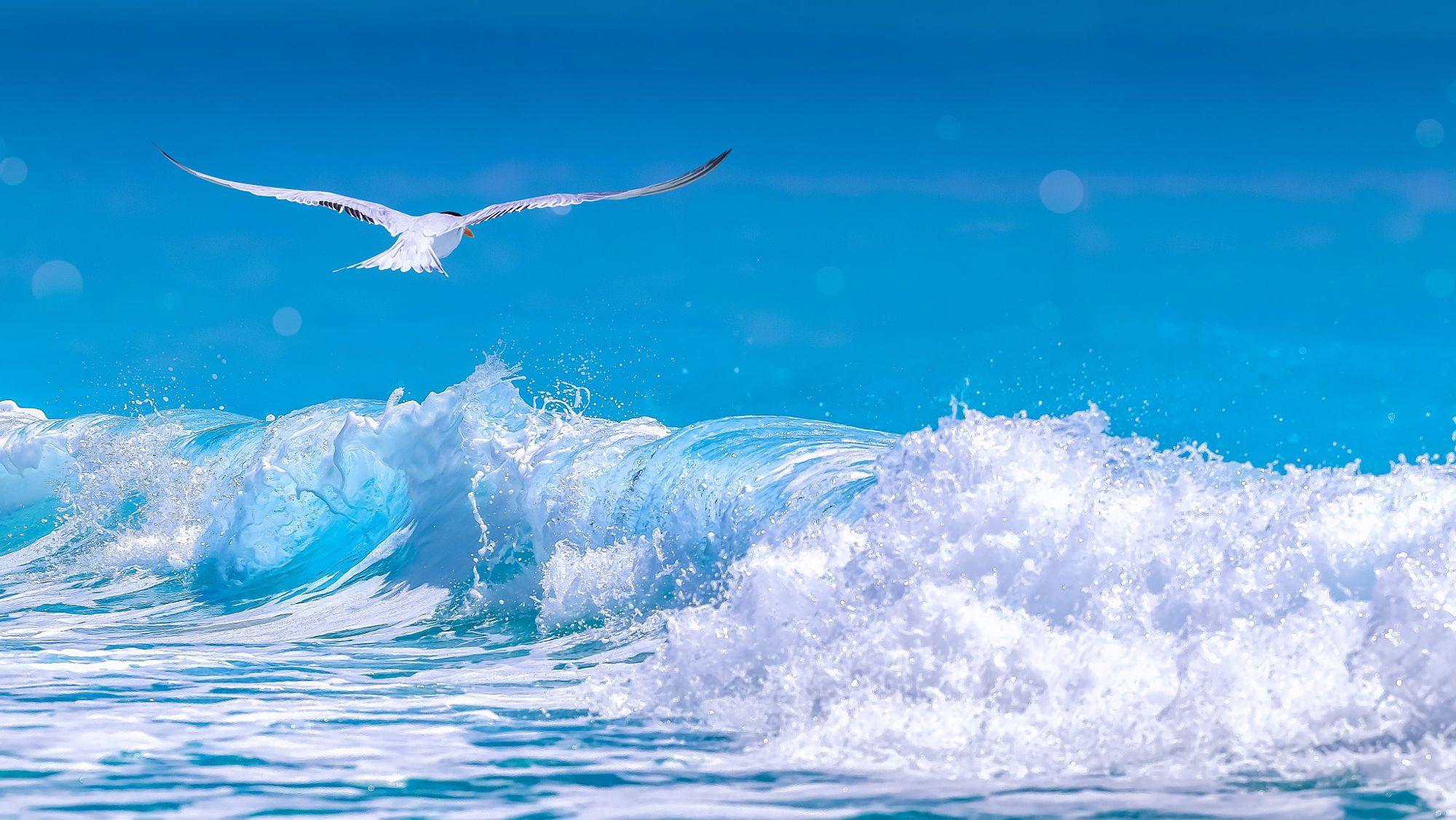 Blue Waves Waves Blue Waves Arctic Tern