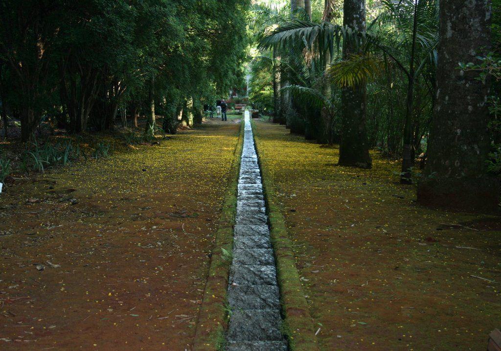 Escada d'água | fazenda do pinhal_são carlos SP