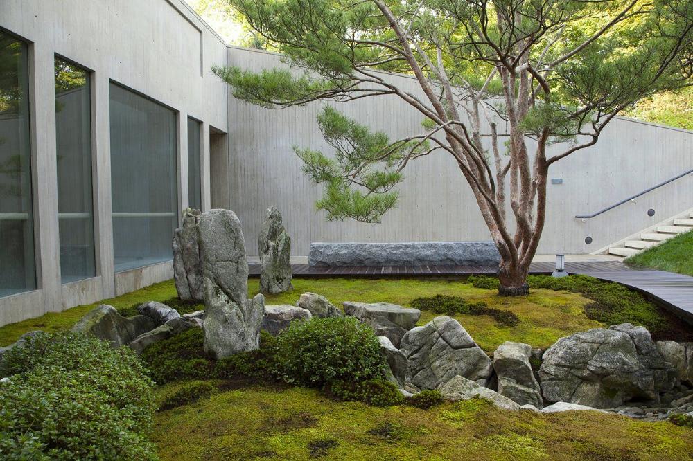 Yard Google 搜索 In 2020 Japanese Garden Plants Japanese Garden Modern Landscaping