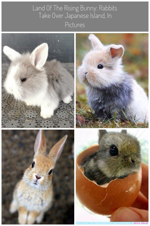 Zwerg Widder Kaninchen Babys In Liebevolle Hande Abzugeben Abzugeben Babys Hande Kaninchen Liebevolle Widder Zwerg Kaninchen Ba In 2020 Kaninchen Baby Widder