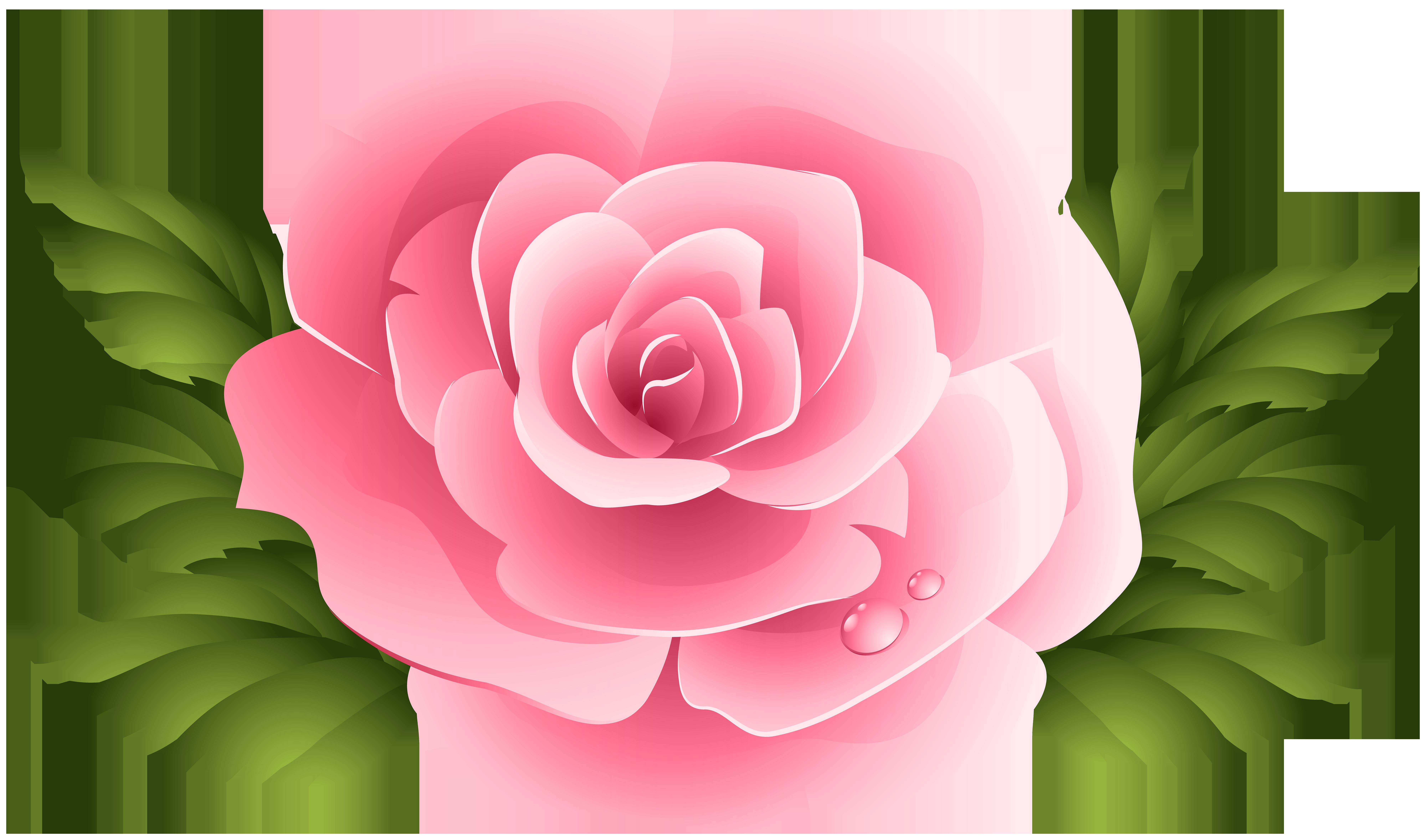 Pin De Ana Paula Em Fotoshop Rosas Roxas Adesivos Personalizados Flores Rosas