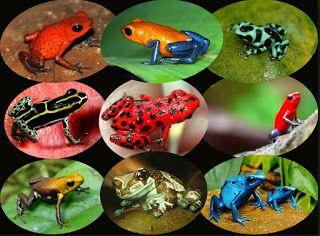 20++ Gambar hewan amfibi terbaru