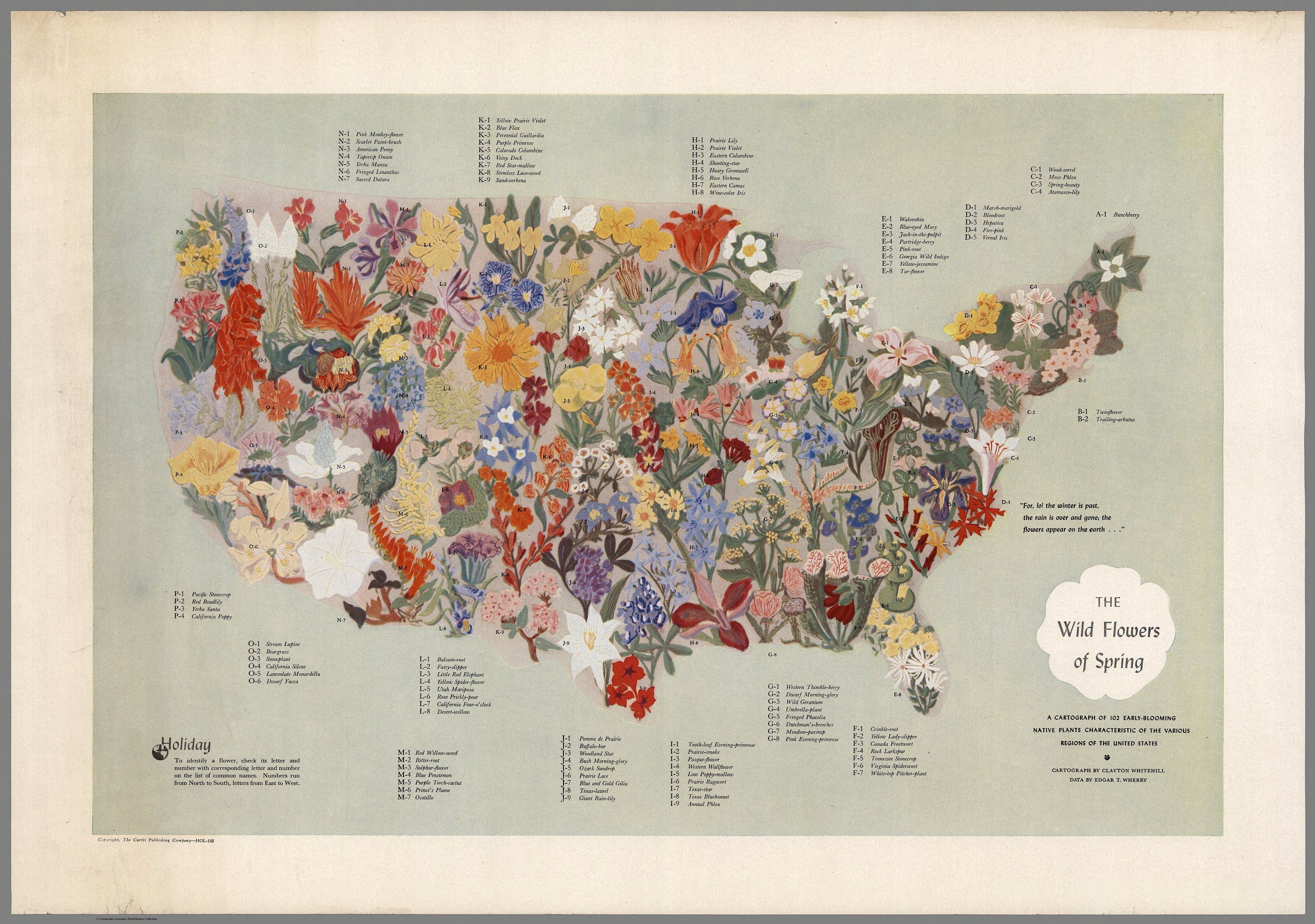 A Midcentury Map Of American Wildflowers Map Wall Art Pictorial Maps Wild Flowers