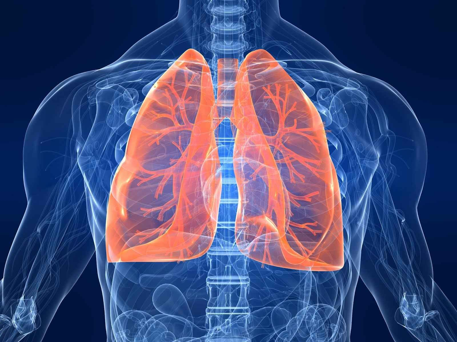 25++ Asbestos in lungs