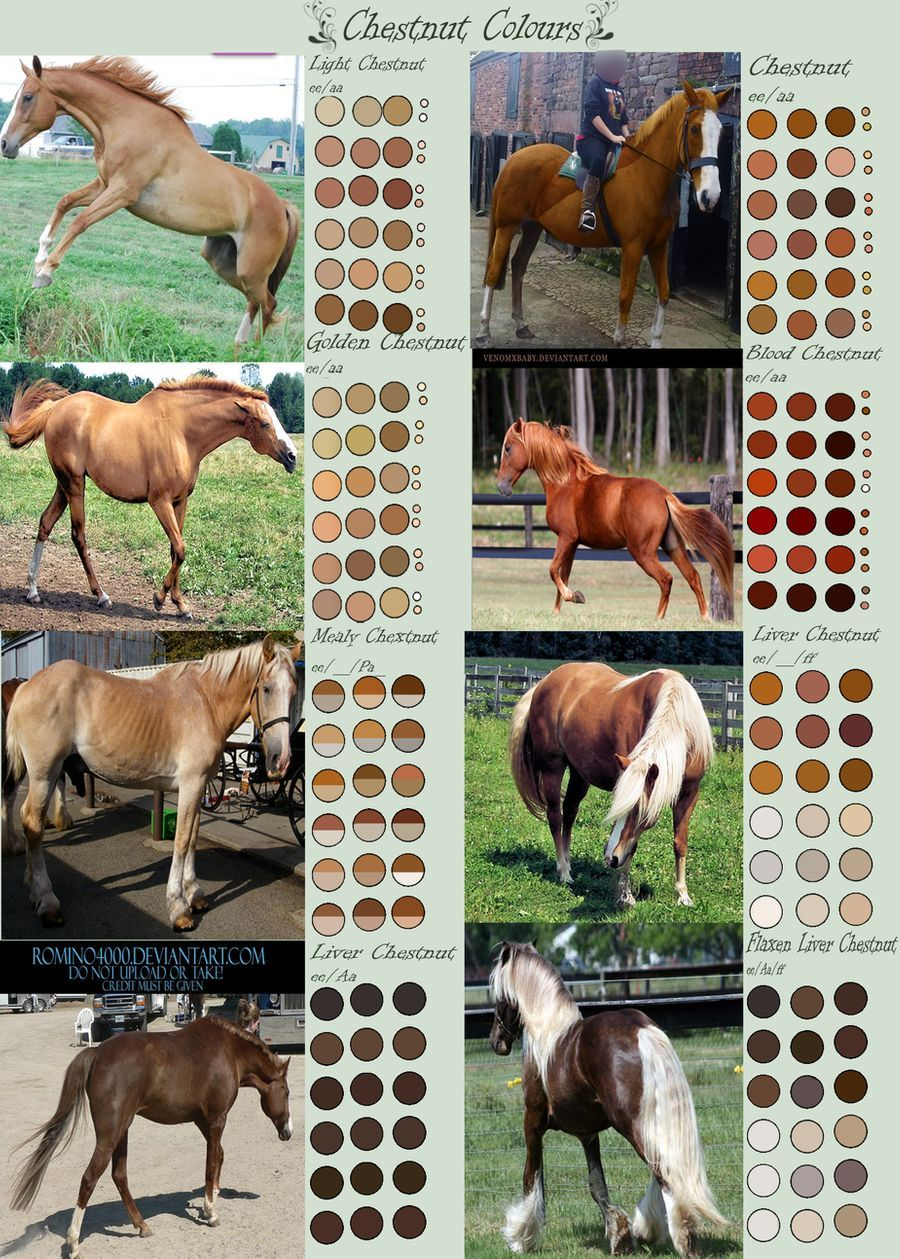 Chestnut Horse Colours By Edithsparrow On Deviantart Chestnut Horse Horse Coloring Horse Color Chart