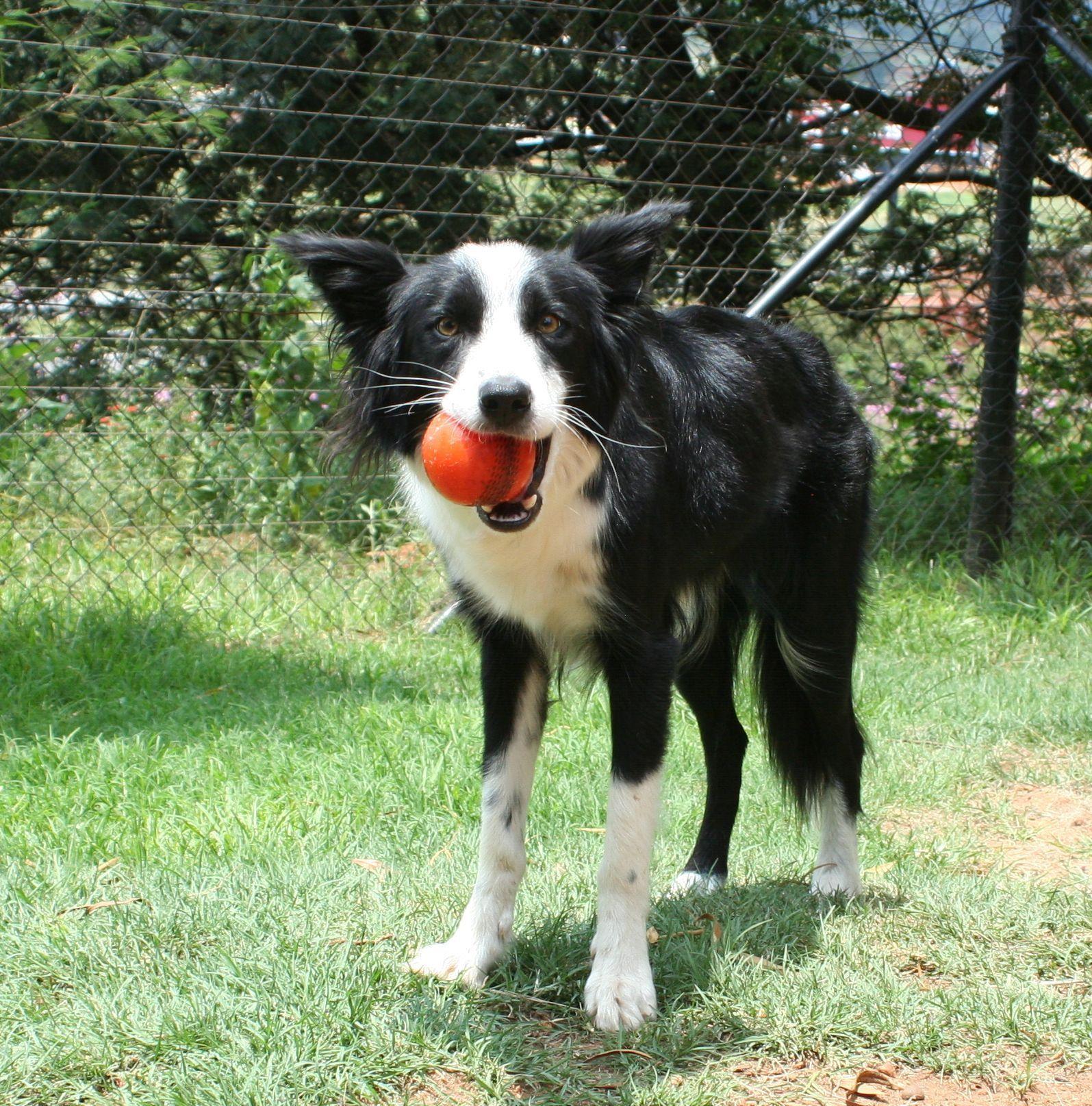 Pet Directory Promoting Pet Adoption In South Africa Pets Pet Adoption Animals