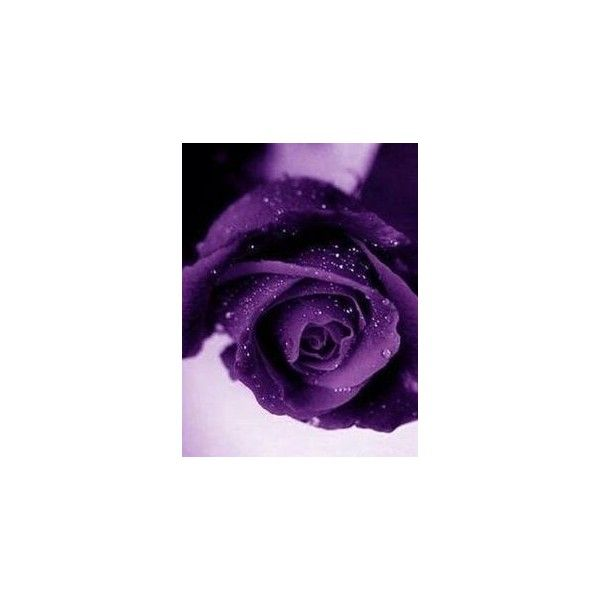 Pin By Nenien Nowhere On My Polyvore Finds Pinterest Violet