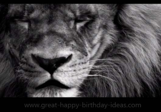 Lion Sings Happy Birthday