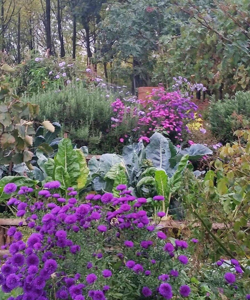 Floravilla Fiori E Piante Da Giardino Aster O Settembrini Con Cavolfiore Bieta