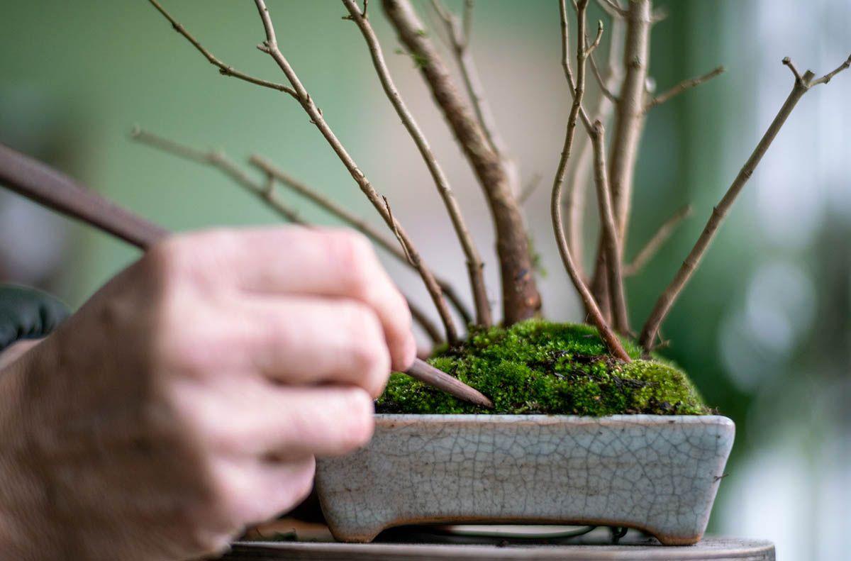 DIY Shohin Bonsai forest in 2020 Bonsai forest, Bonsai