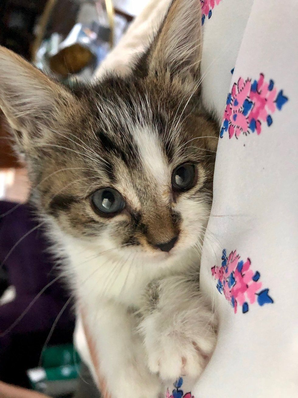 Employee Hears Kitten S Cries And Finds Kitty In Shopping Cart They Rush To Get Him Help Kittens Dog Blog Cat Help
