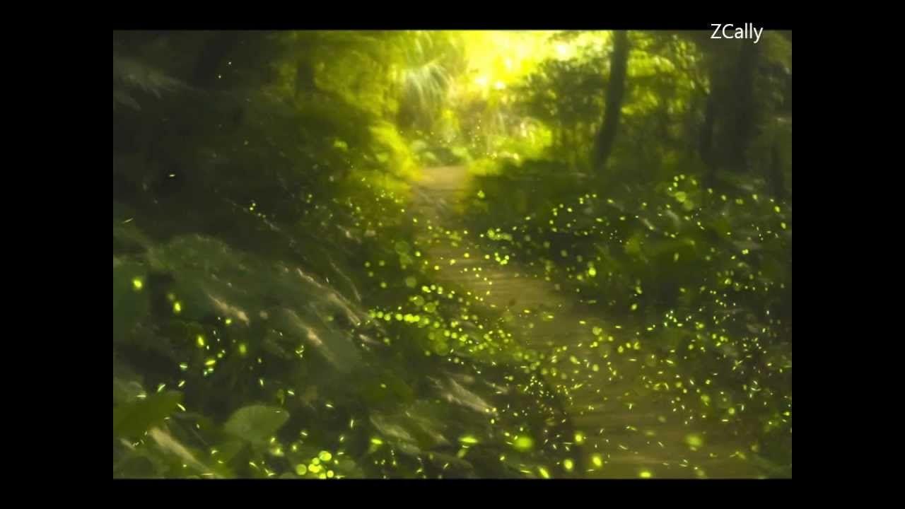 La Rosa De Los Vientos Con Letra Mago De Oz Mago De Oz Luciernagas En El Jardin Luciernagas