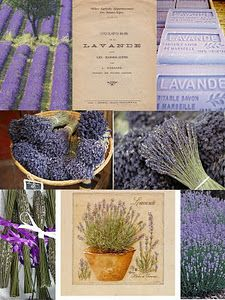 I picked up one of these lavender prints in Provence...