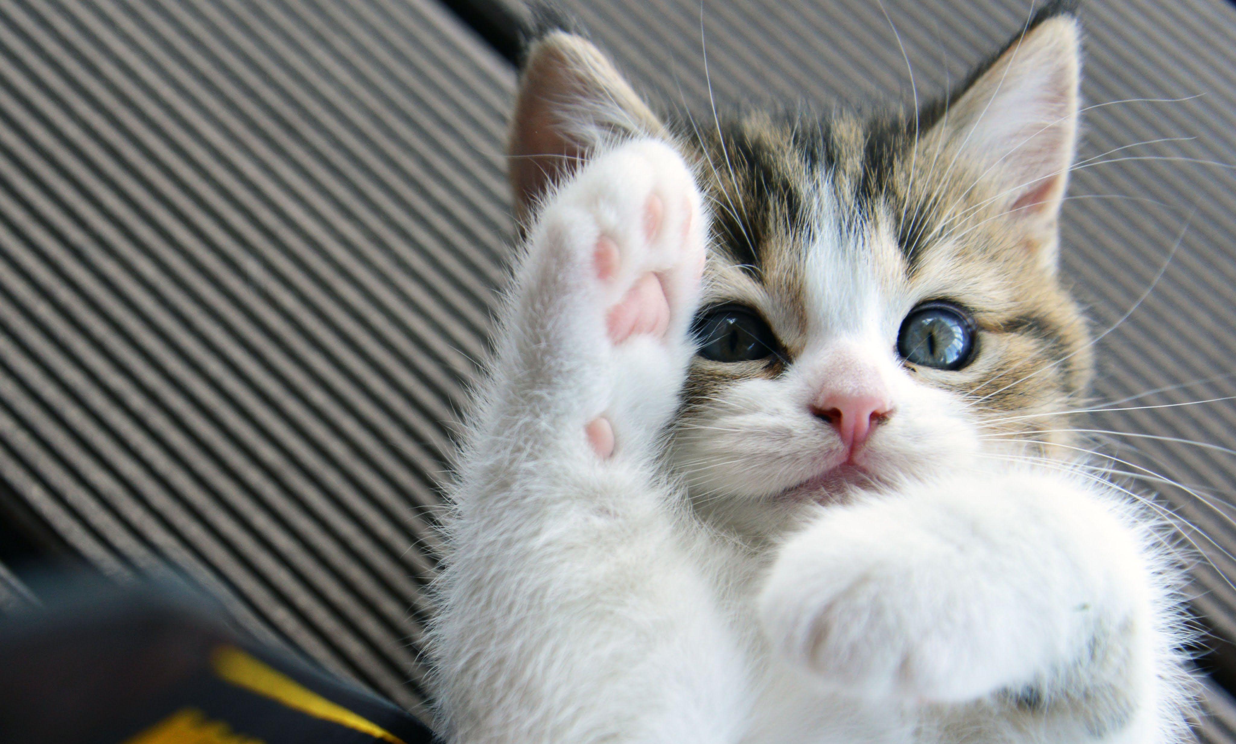 Видео про котят картинки, спасибо песни продажа