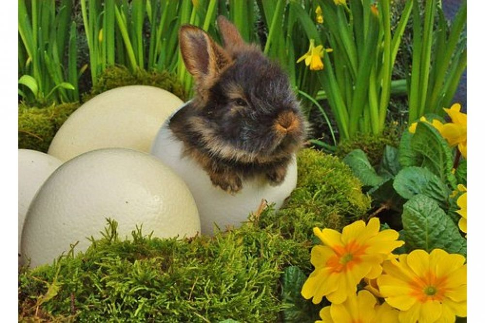 Are you an animal lover?  Love Rabbits? Visit us by clicking active link on our bio/profile.  #bunnysept #bunnygirls #bunnysecretstash #bunnyhouse #bunnyfresh #bunnymodel #bunnymum #bunnyhead #bunnylines #bunnyranch #bunnyfamily #bunnypinterest #bunnyinhollywood #bunnyspace #bunnyland