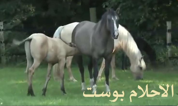 تفسير رؤية الحصان والخيل والفرس في المنام بالتفصيل لكل حلم الاحلام بوست Horses Animals