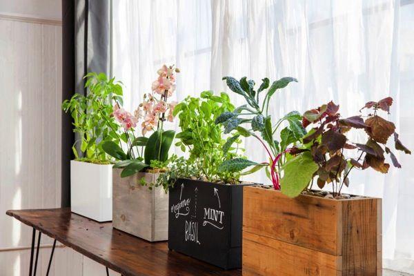 家庭菜園を諦めている人へ シカゴの夫婦がつくったオシャレな水耕栽培