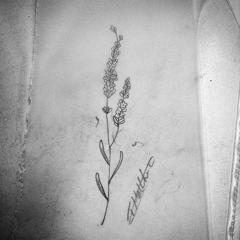 Outline, Flower, Plant, Tattoo, Botany - Black And White ... |Lavender Tattoo Outline