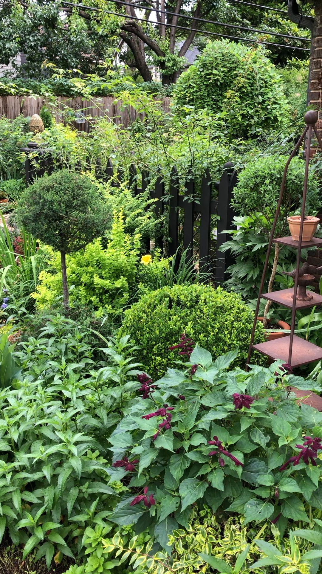 Creating A Topiary From A Garden Volunteer Creating Garden Projetodojardim Shade Garden Backyard Landscaping Cottage Garden