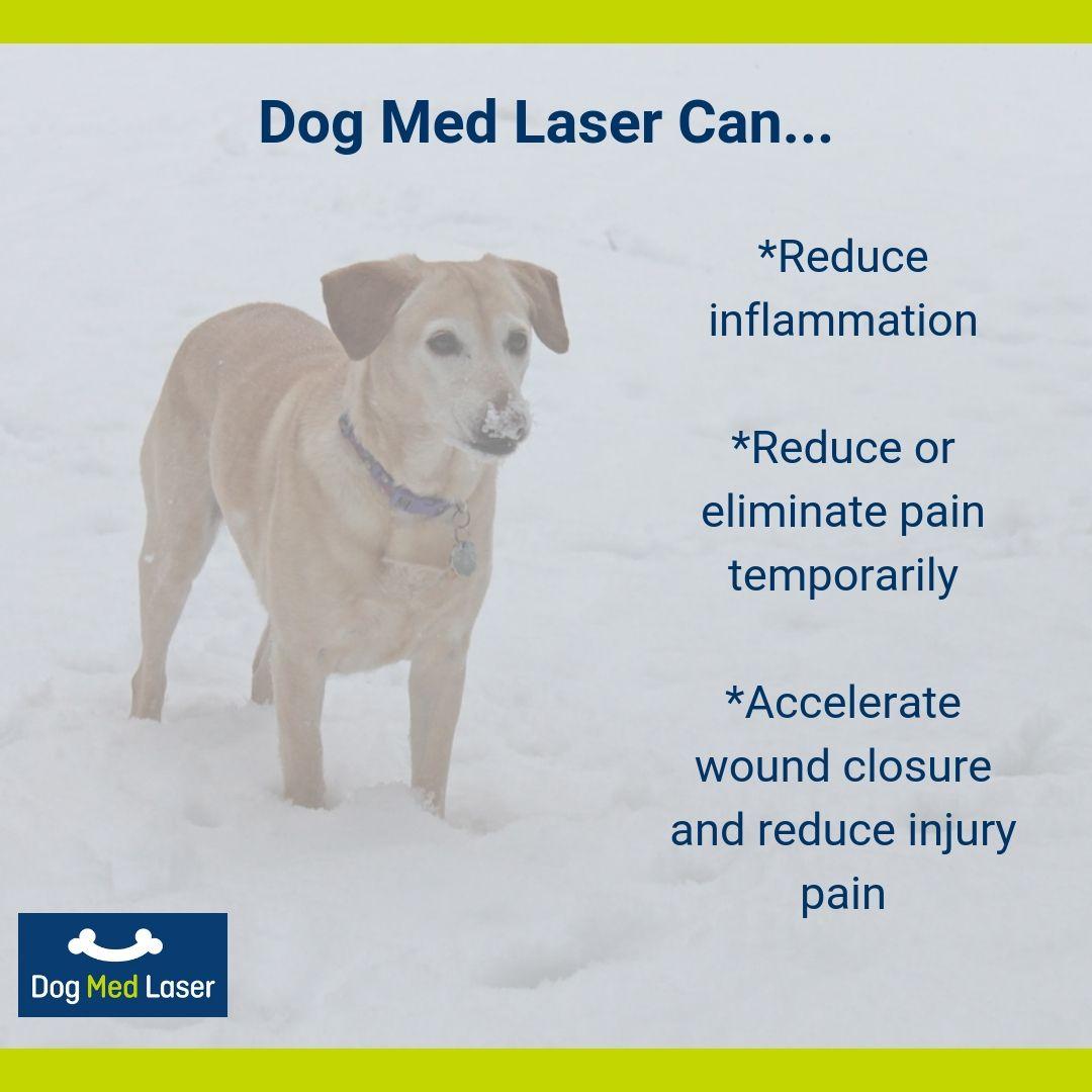 Home Dog Med Laser Meds For Dogs Can Your Pet Dogs