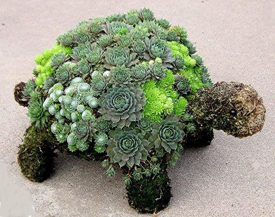 Love this for my Garden!   Succulent Turtle Topiary created with Succulents . . . .