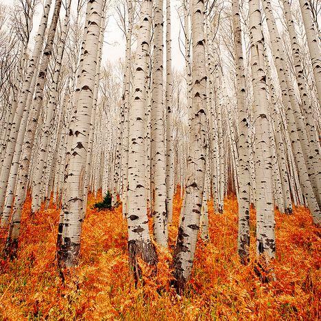 Wood. #kleurinspiratie