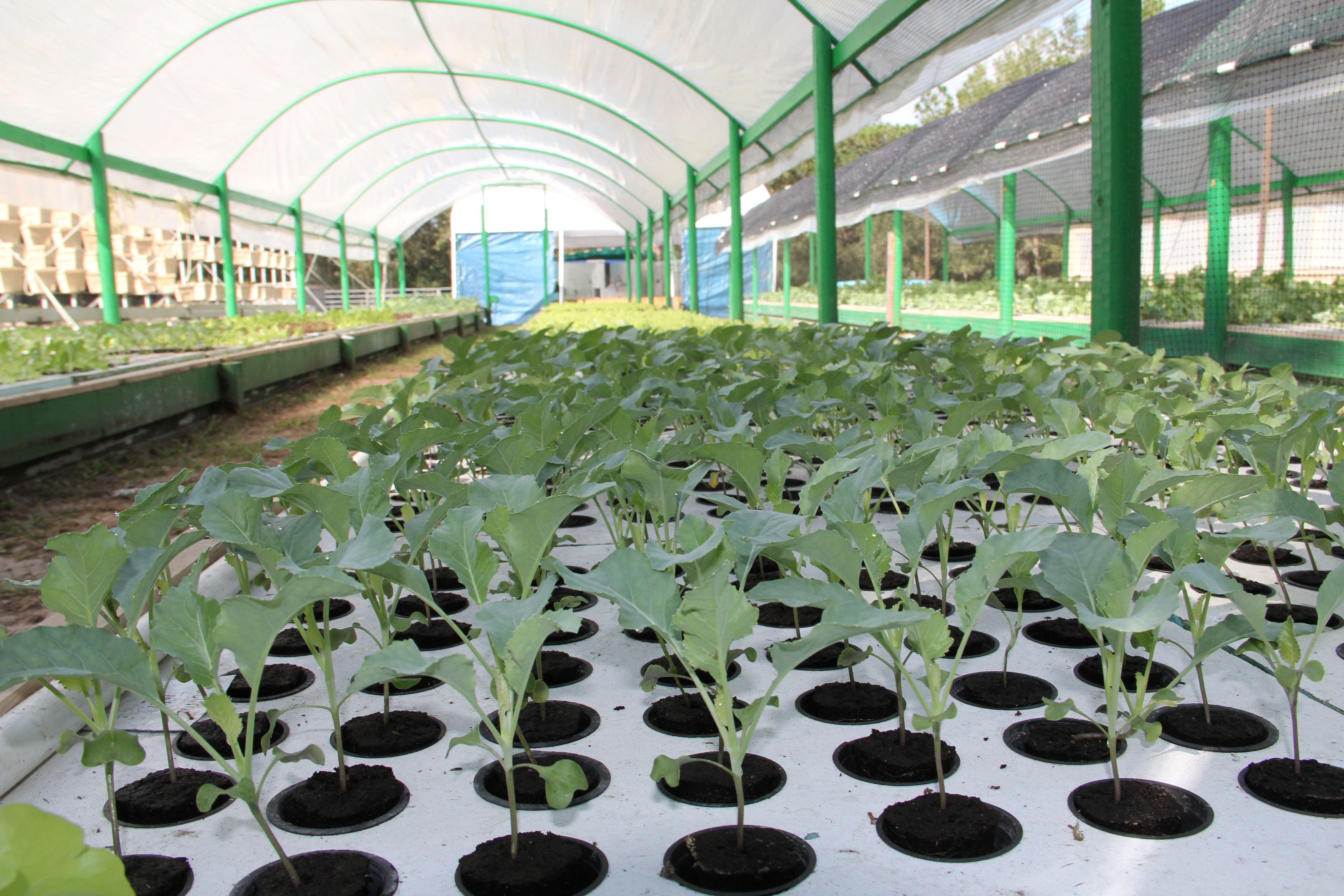green acre aquaponics florida the aquaponic farming course