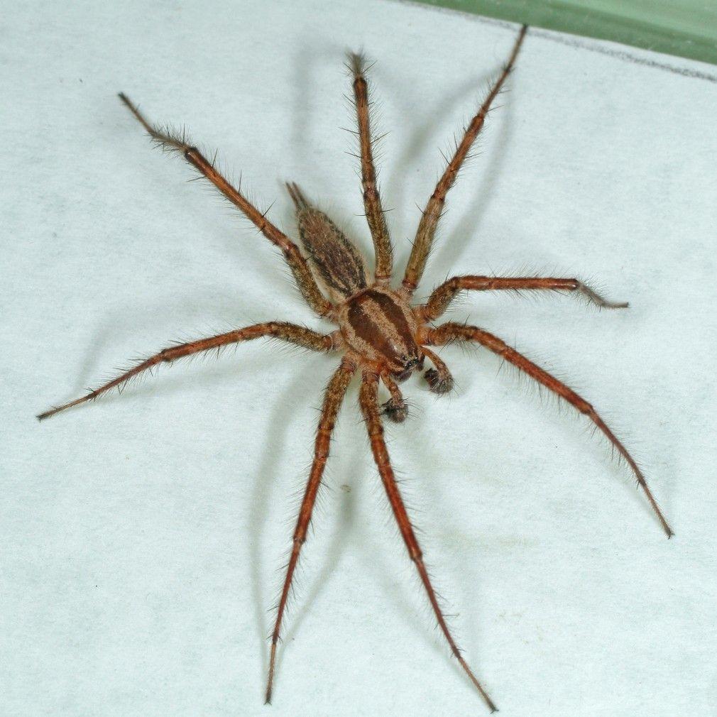Biggest Spider Colorado