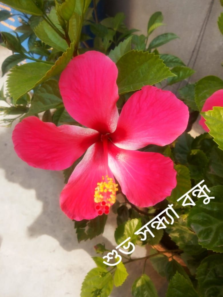 Pin By Love Story On Good Morning Photo English And Bengali Good Morning Photos Photo Plants